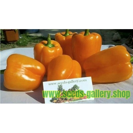 Söt Paprika Orange Sun Frön