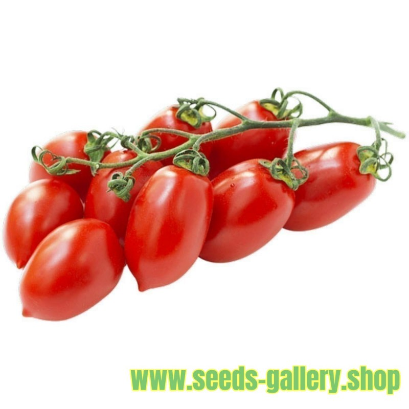 Piccadilly Plum Small Vine tomato Seeds