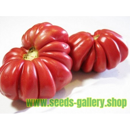 Graines de Tomate Pink Zapotec Ou Pink Accordion
