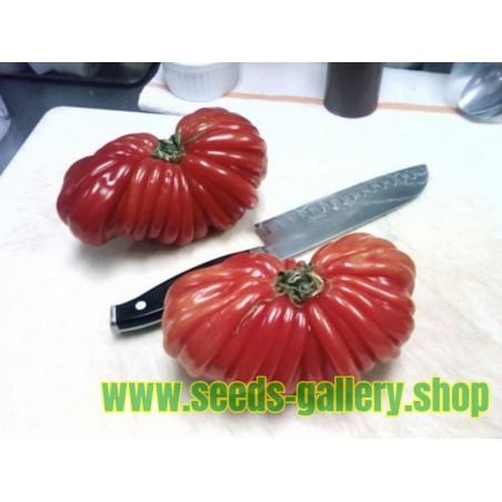 Tomatfrön Pink Accordion