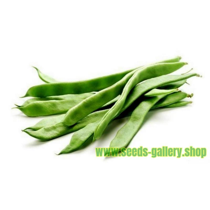 Semillas De Frijol verde 'Cer Starozagorski'