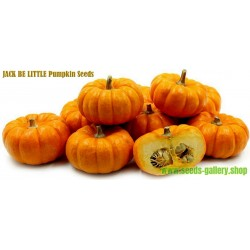 Pumpkin JACK BE LITTLE seeds