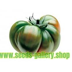 Tomatfrön RAF