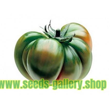Graines de Tomate RAF