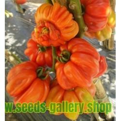 Rare Zapotec Ribbed Tomato Heirloom Organic Seeds
