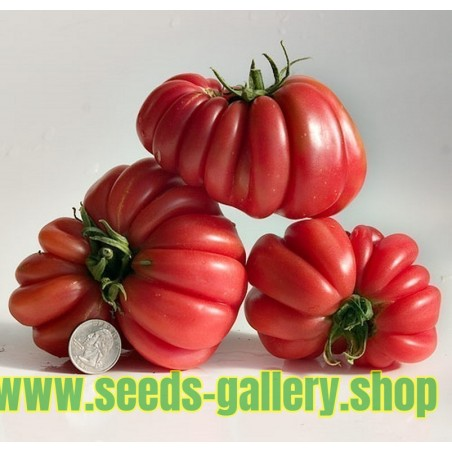Rare Zapotec Ribbed Tomato Heirloom Organic Seeds