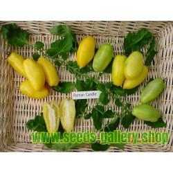 Σπόροι Ντομάτα ROMAN CANDLE
