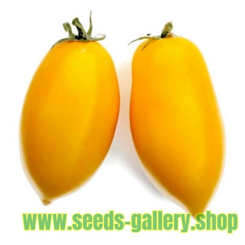 Tomatfrön ROMAN CANDLE