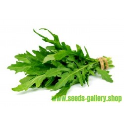 Rucola Frön (Eruca sativa)