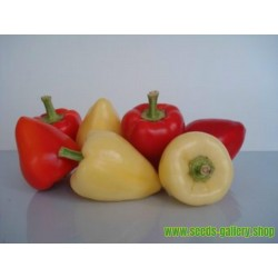 SOMBORKA hot bell pepper seeds