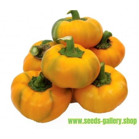 Semillas de pimienta-dulce-roja ROTUND amarillo
