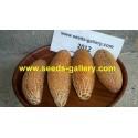 Semillas de pepino Sikkim