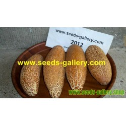 Σπόροι Αγγούρι Poona Kheera