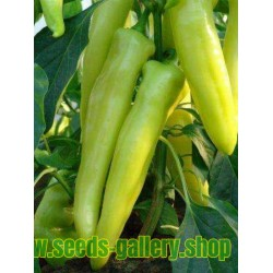 Γλυκιά πιπέρι Σπόροι ECSTASY