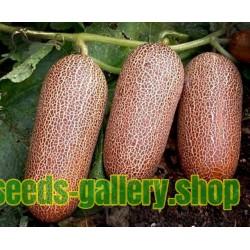 Graines de Concombre Poona Kheera