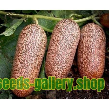 Semillas de Pepino Poona Kheera