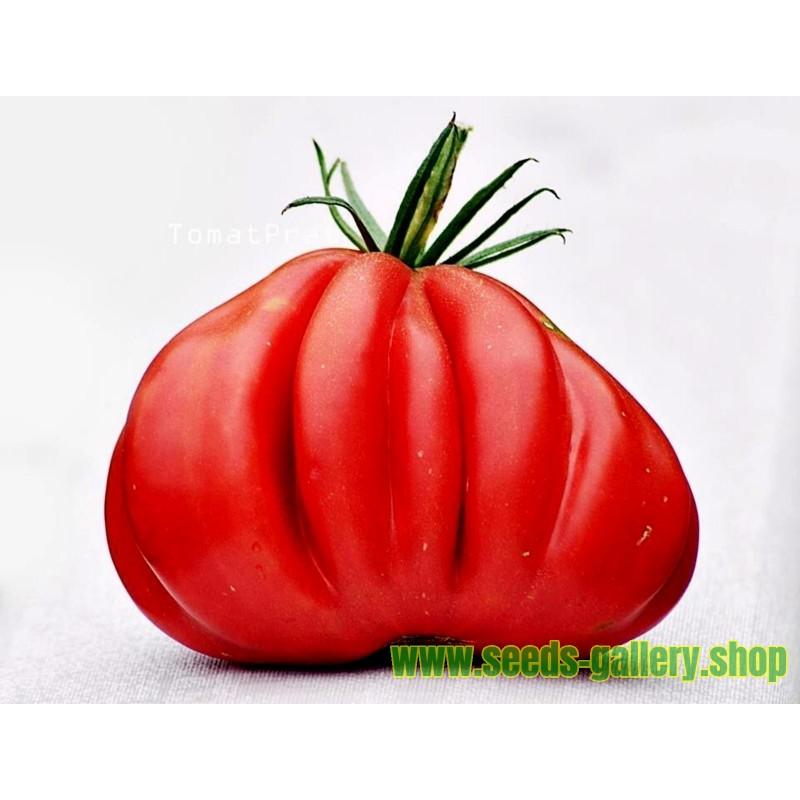 Sementes de Tomate TLACOLULA RIBBED