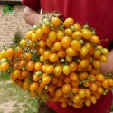 Graines de Cresson de fontaine - Plante médicinale