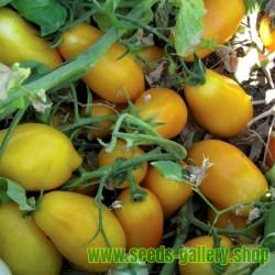 Gelbe San Marzano Tomatensamen