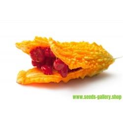 Gorka Dinja - Karfela Seme (Momordica charantia)