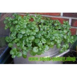 Echte Brunnenkresse Samen, Wasserkresse - Heilpflanze