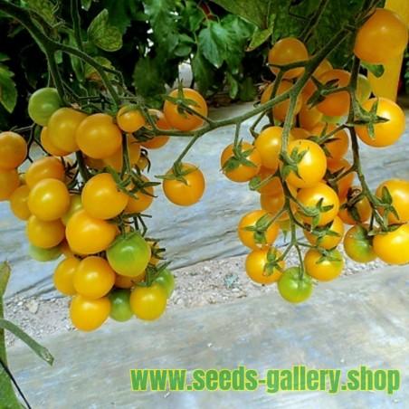 Yellow Cherry Tomato Seeds