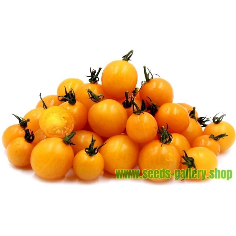 Semillas de Tomate Cereza Amarillo