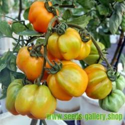 Basilikum Saatgut MIX 4 verschiedenen Sorten