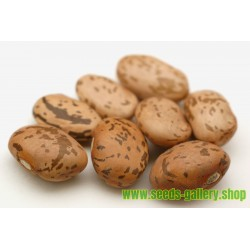 """Pinto"" Bean Seeds (Phaseolus vulgaris)"