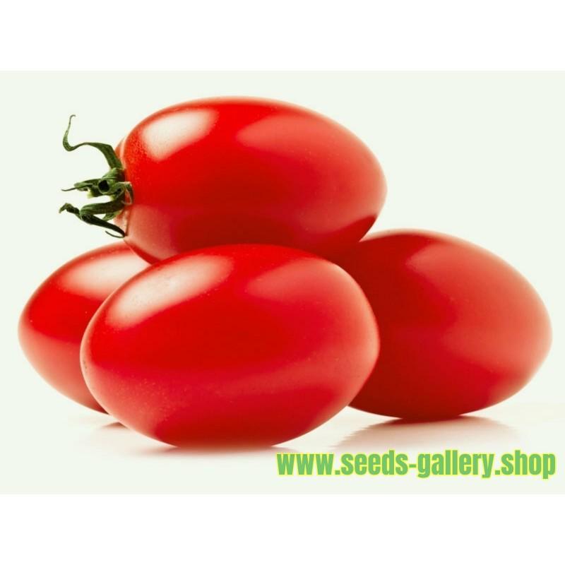 """Semillas de Tomate """"Zomok"""""""
