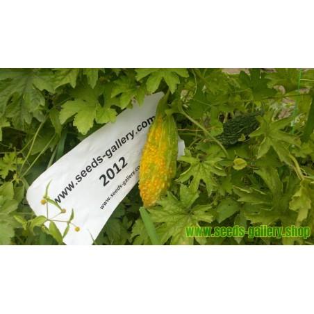 Semi di Charantea (Momordica charantia)