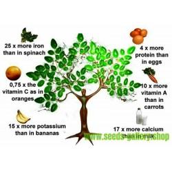 Σπόροι Μορίνγκα δέντρο θαύμα