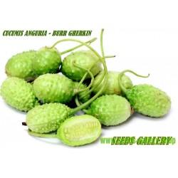 Gurka frön West Indian Gurka