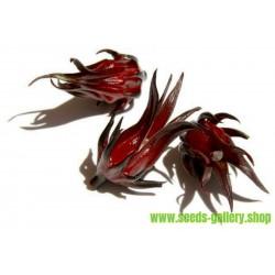 Roselle Samen - Essbar und lecker