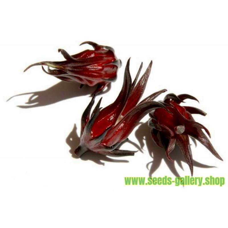 Graiones de Oseille de Guinée, Roselle