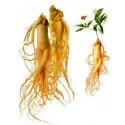 Ginseng Samen Heilpflanze, Kraftwurzl plant