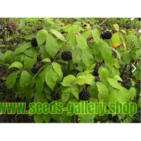 Sementes de Ginseng Siberiano