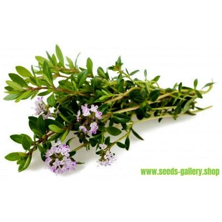 Sommarkyndel Frön (Satureja hortensis)