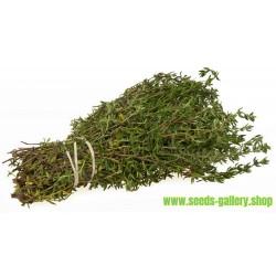 Thyme, Garden Thyme Seeds (Thymus vulgaris)