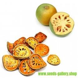 Σπόροι Bael φρούτων (Aegle marmelos)