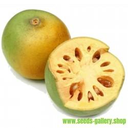 Behlträd frön (Aegle marmelos)