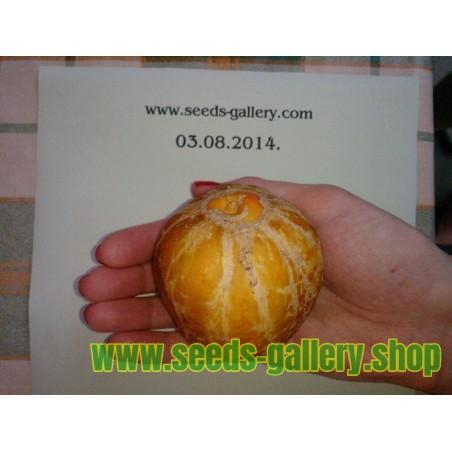 Limun Krastavac Seme