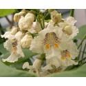 Seme Bosiljka MIX 4 razlicite sorte