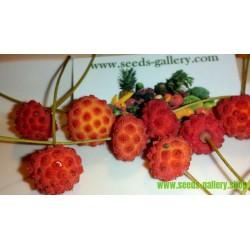 Kousa dogwood Frön ätbara frukter