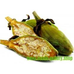 Baobab (drvo zivota) Bonsai Seme