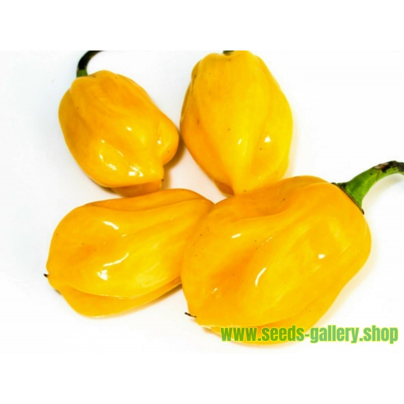 Graines de piment Burkina Yellow - Jaune