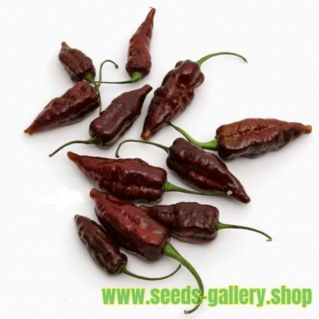 """Chili frön """"Fatalii Choklad"""""""