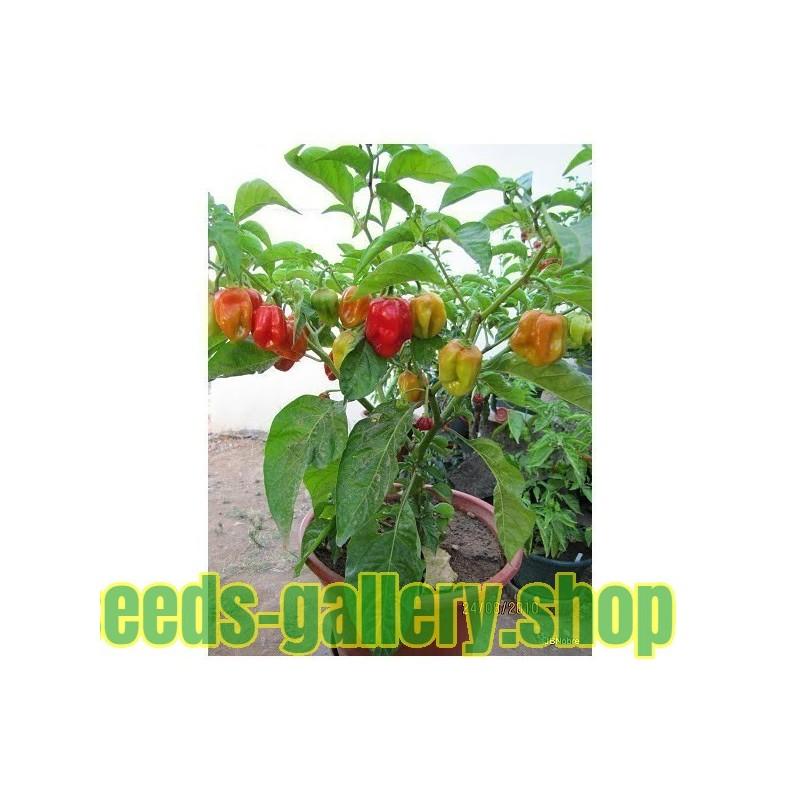 Scarlet Firethorn Seeds