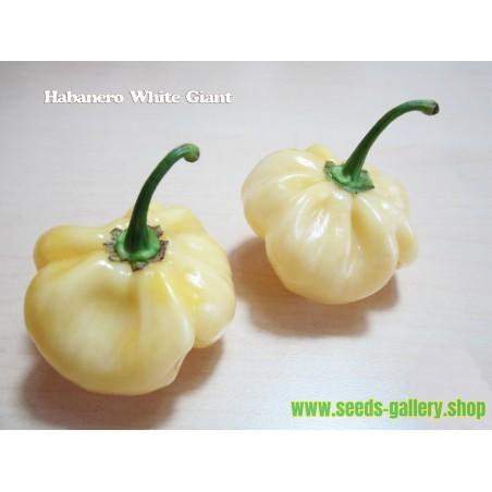 Semillas Pimiento Giant White Habanero