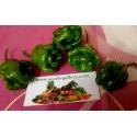 Naga Morich Chili Samen
